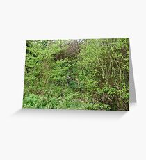 newly formed waterfall Greeting Card