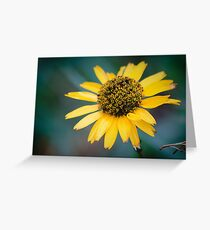 Sun Pedals Greeting Card