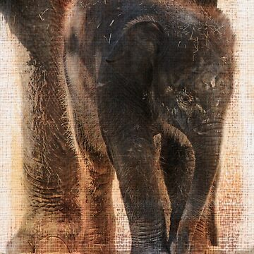 Vintage Asian Baby Elephant by carolv723