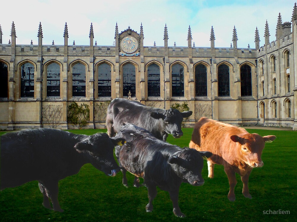 cows in college by scharliem