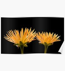 Golden Ice Plant Poster