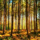 Tewin Wood by Nigel Bangert