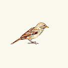 Sparrow by Dan Tabata