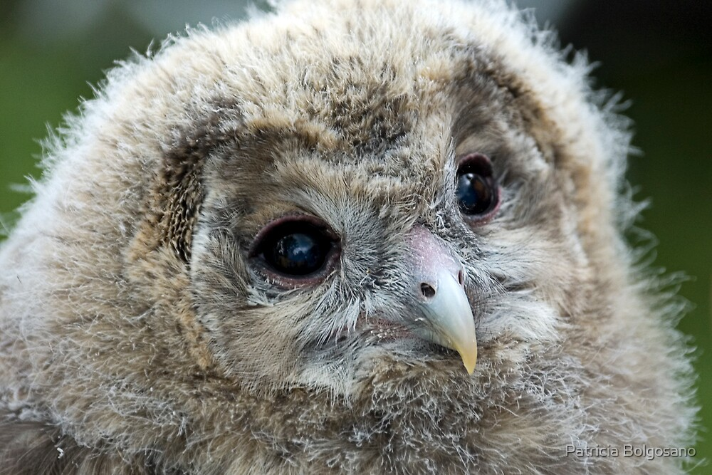 Baby Owl by Patricia Bolgosano