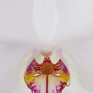 Orchid 3 by Mimiq