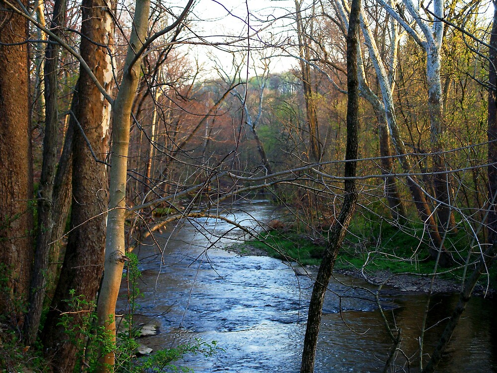 French creek at dusk by Judi Taylor