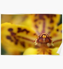 The Floriade Orchid Poster