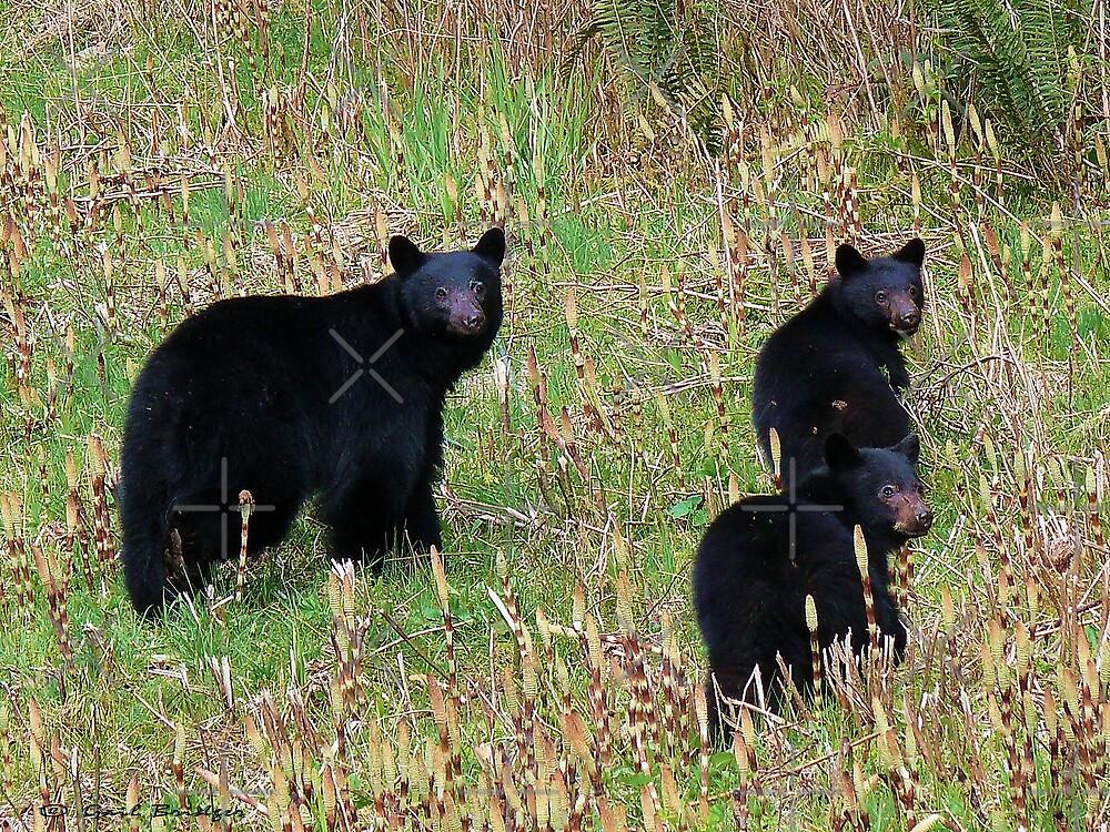 The Bear Trio by Gail Bridger