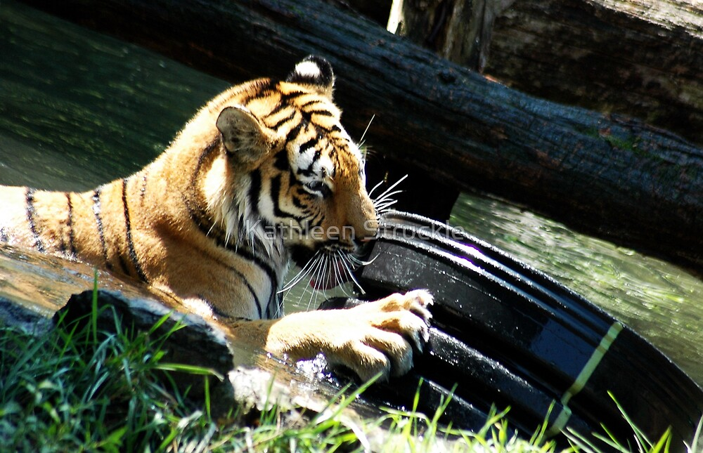 Tiger Playing by Kathleen Struckle