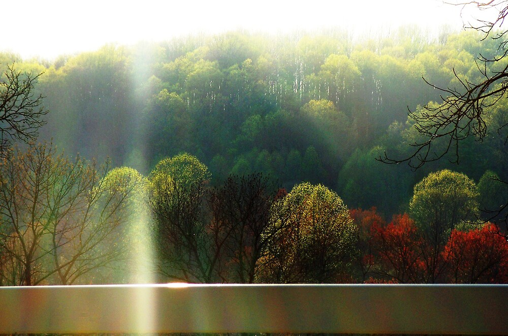 Heavenly light thru the trees by Judi Taylor