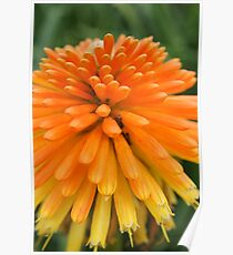 Floriade Yellow Orange Poster