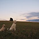 Awaiting the sunrise by Lissie EJ