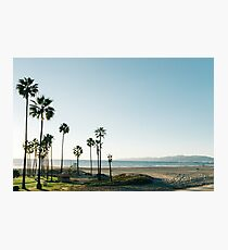 Southern California Palm Trees Photographic Print