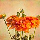 Sonnige orange Ranunculusblüten von Celeste Mookherjee