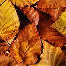 Autumn Leaves by Kylie Reid