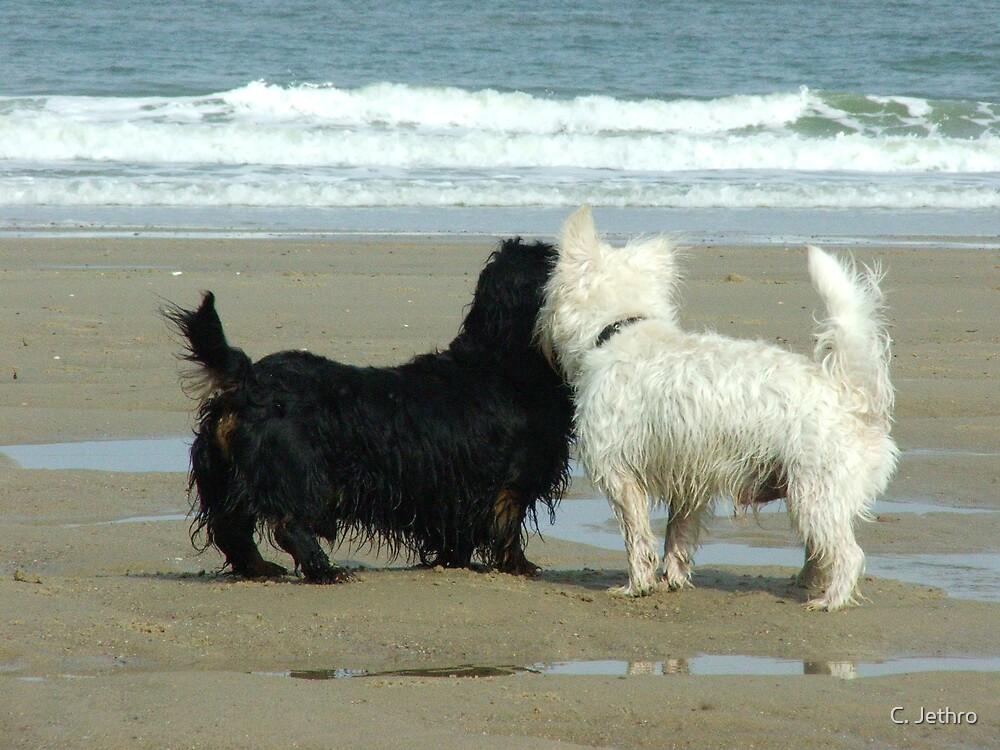 beach lovers by C. Jethro