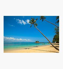 Tropical Palm Trees Photographic Print