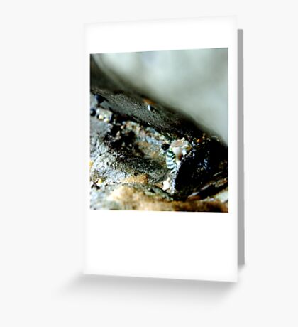 untitled #30 [flat rocks] Greeting Card