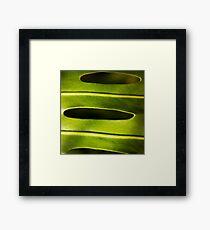 Monstera plant botanical photography Framed Print