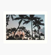 Pacific Palms Art Print