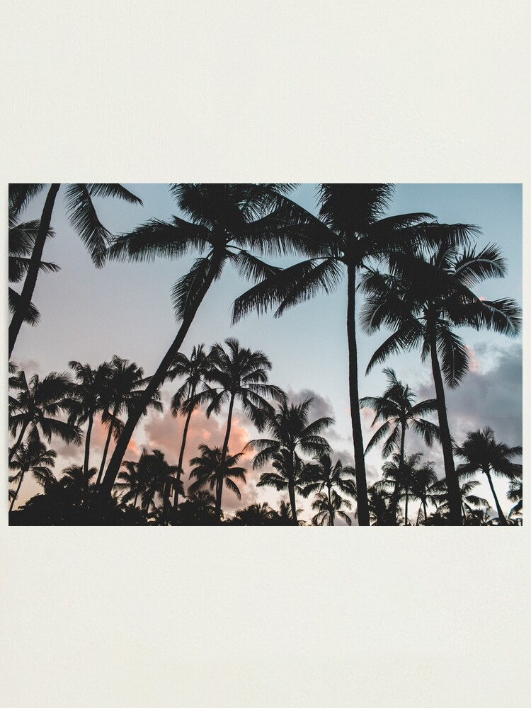 Alternate view of Pacific Palms Photographic Print