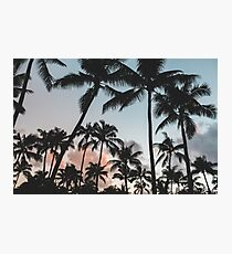 Pacific Palms Photographic Print