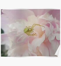 Green Spider on Pink Peony Poster