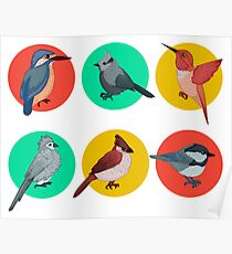 Colorful Birds. Different Birds. Set of Birds. Hand Drawn Poster