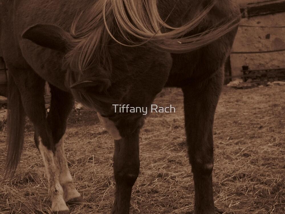 Had an Itch by Tiffany Rach