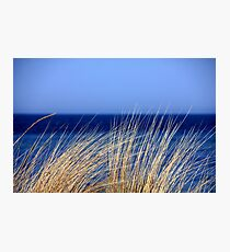 Ocean Grass on the seashore Photographic Print