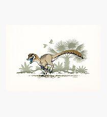 Troodon Photographic Print