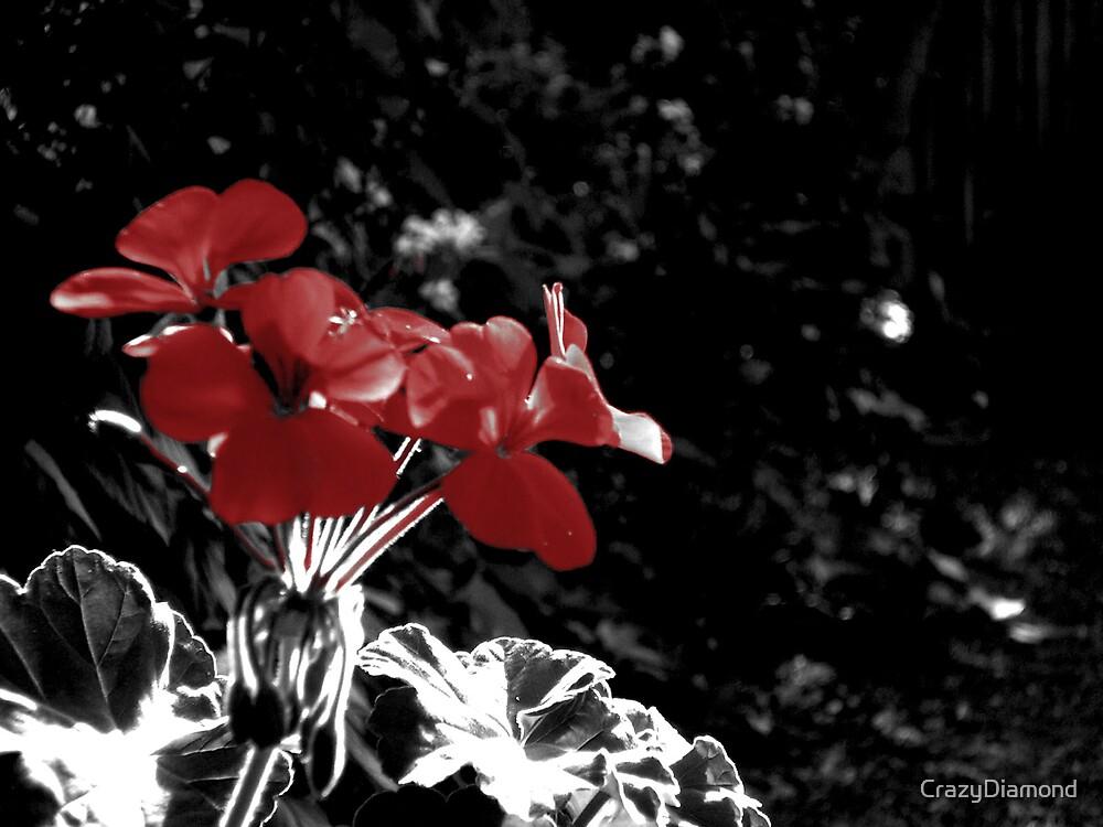Red Flowers by CrazyDiamond