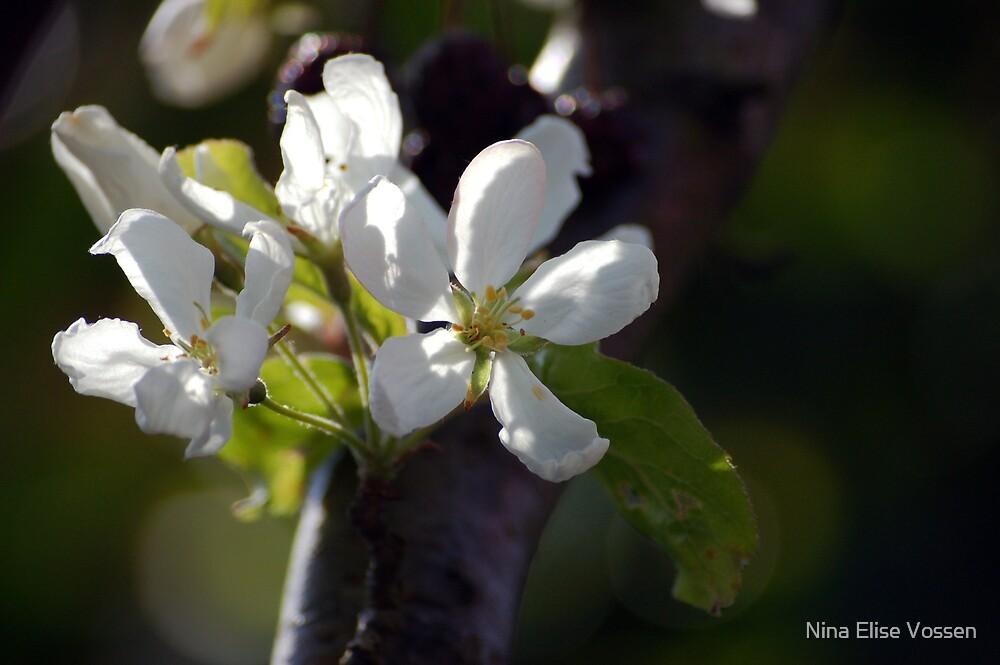 Appleblossom. by Nina Elise Vossen