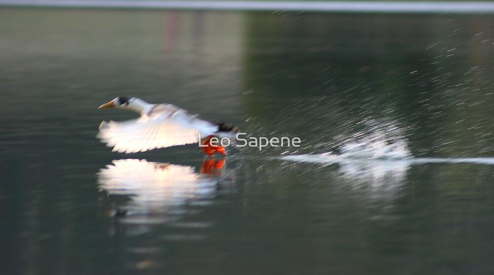 Taking off by Leo Sapene