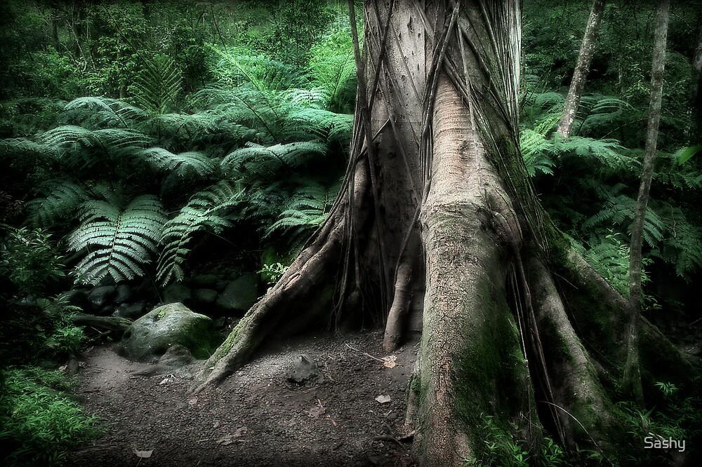 The Magic Tree by Sashy