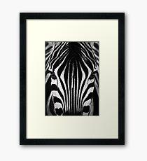 Zebra Face Framed Print