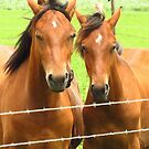 Horses on the Farm  by lorilee