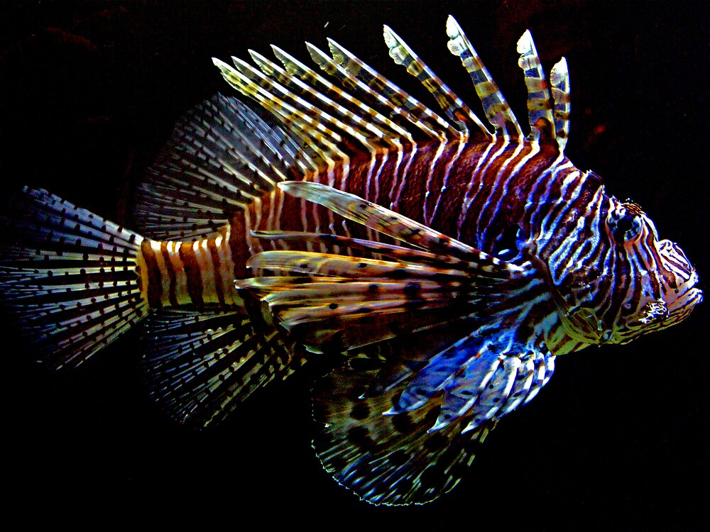 Lion Fish by Swede
