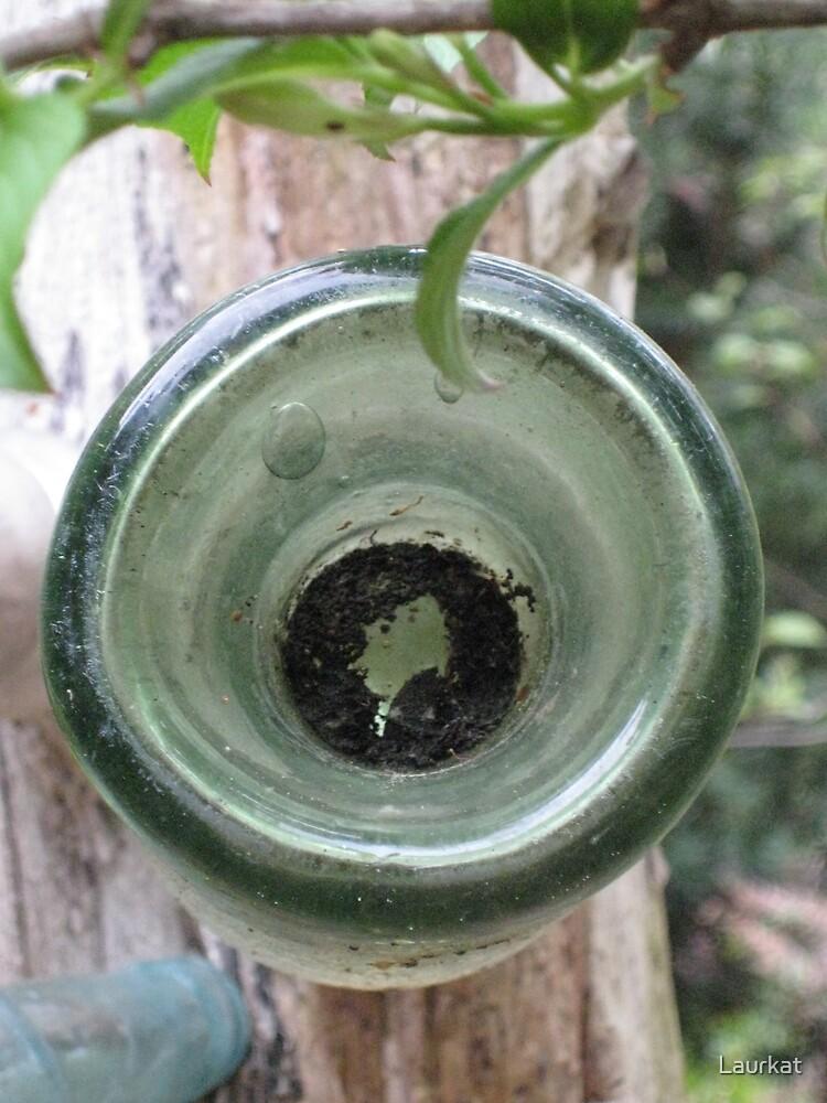 Joan's bottle tree by Laurkat