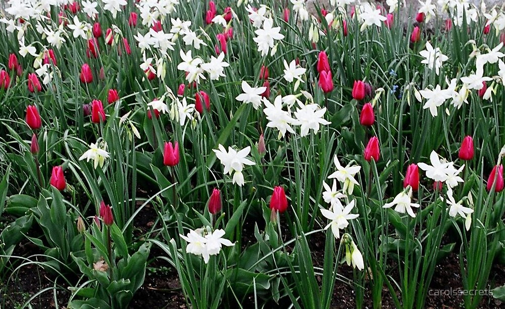 Spring Break by carolssecrets