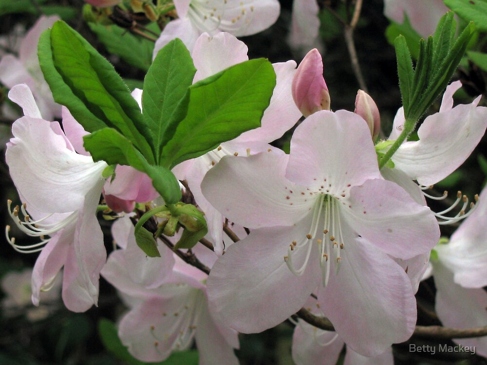 Signs of Spring by Betty Mackey