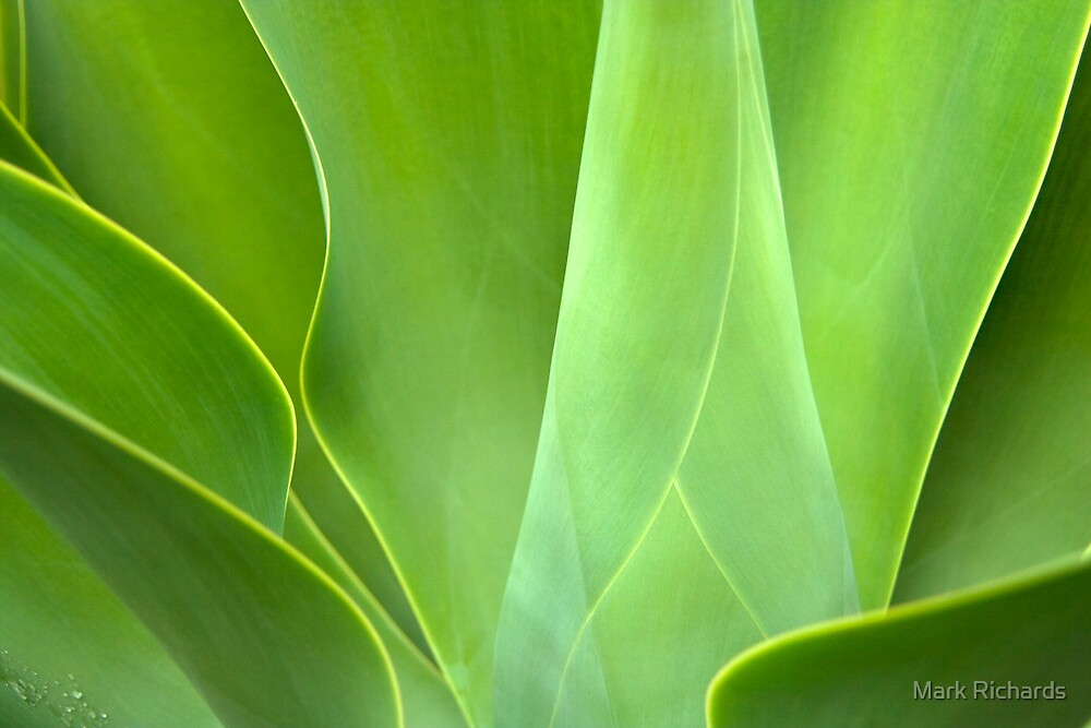 Blue Foxtail Agave - St Vincents Hospital, Darlinghurst, NSW, Australia by Mark Richards