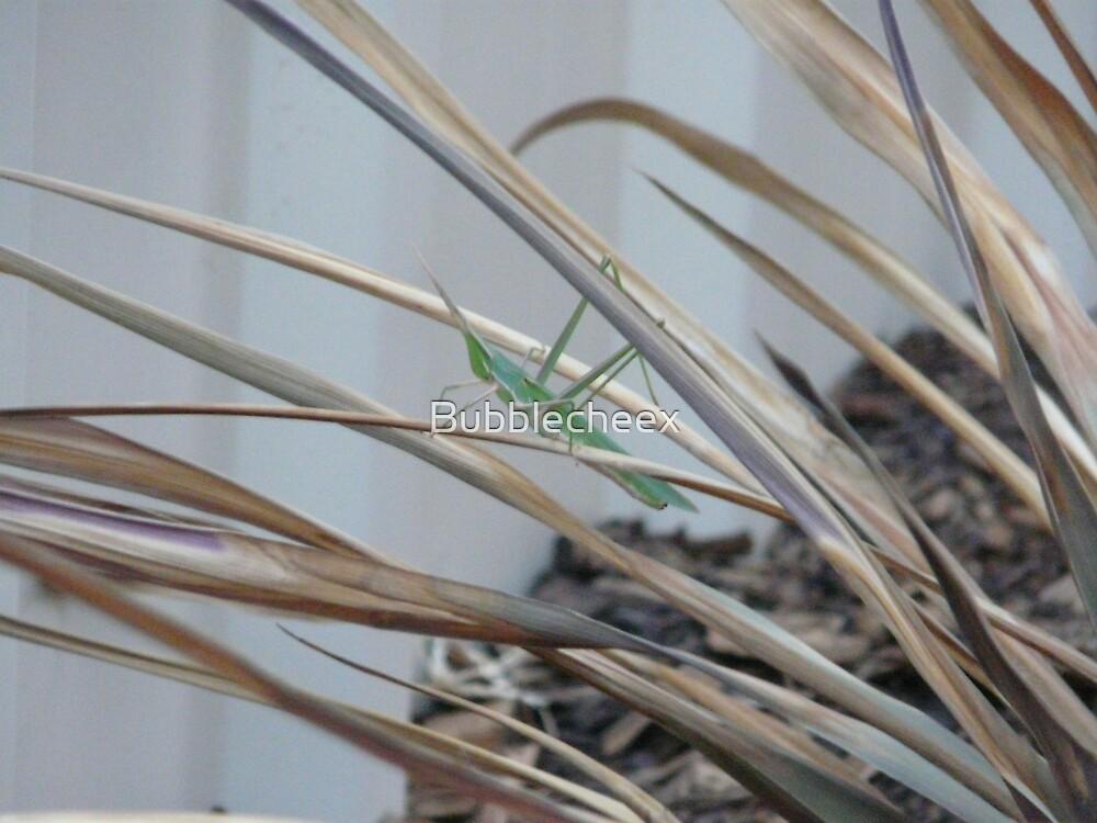 Preying Mantis by Bubblecheex