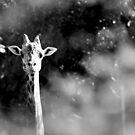 Porträt der Giraffe von Marianna Tankelevich