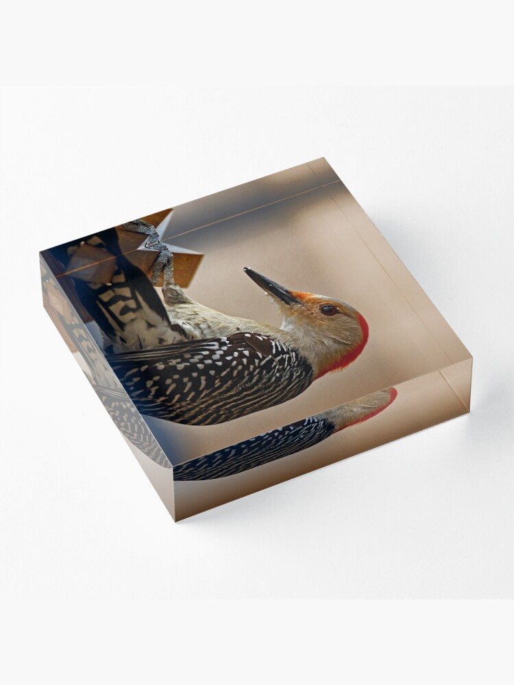 Alternate view of Red-Bellied Woodpecker on a Feeder Acrylic Block