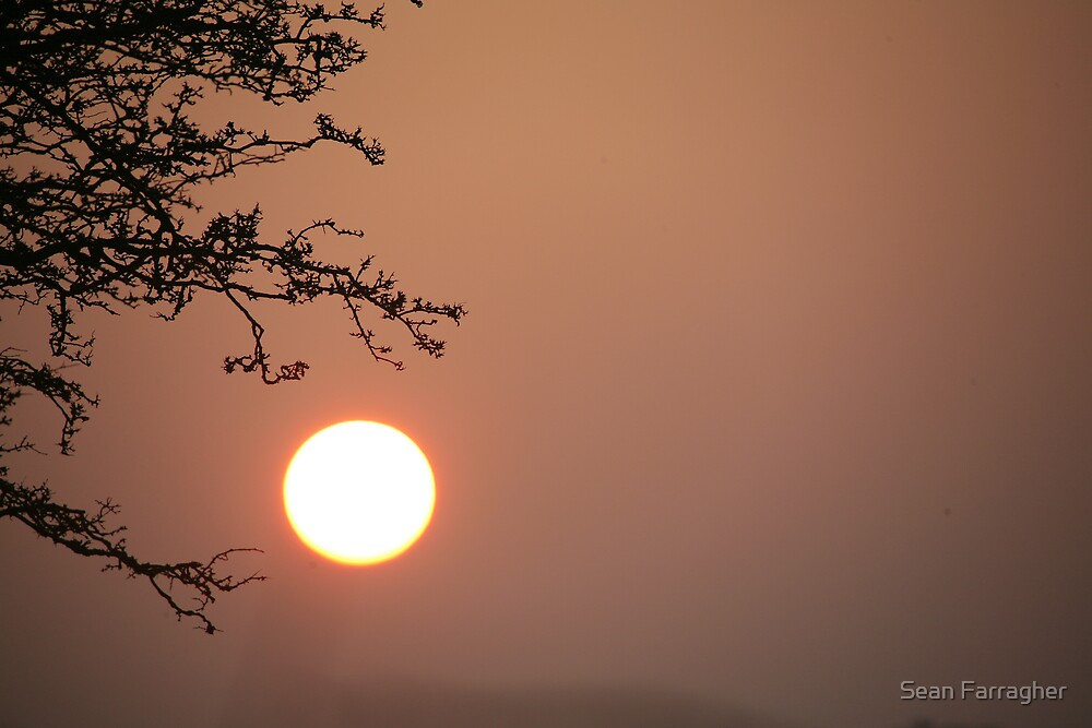 SUNRISE AND TREE by Sean Farragher