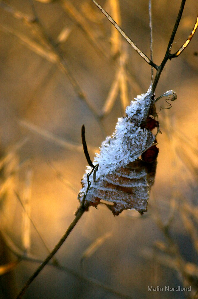 Winter Cone by Malin Nordlund