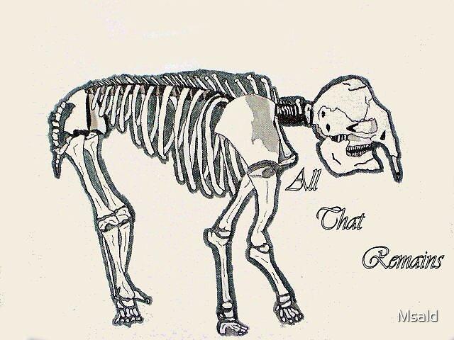 Elephant Skeleton by Msald