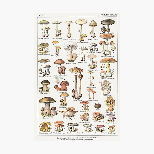 Mushrooms Photographic Print