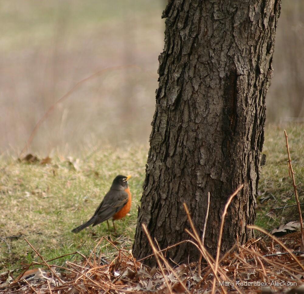 Robin by Mary Kaderabek-Aleckson